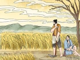 《观刈麦》白居易古诗原文翻译及鉴赏